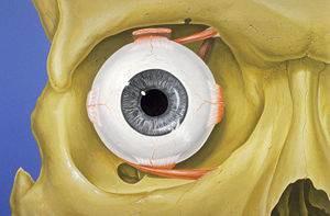 Órbita e Vias Lacrimais